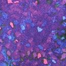 Purple Impressionist